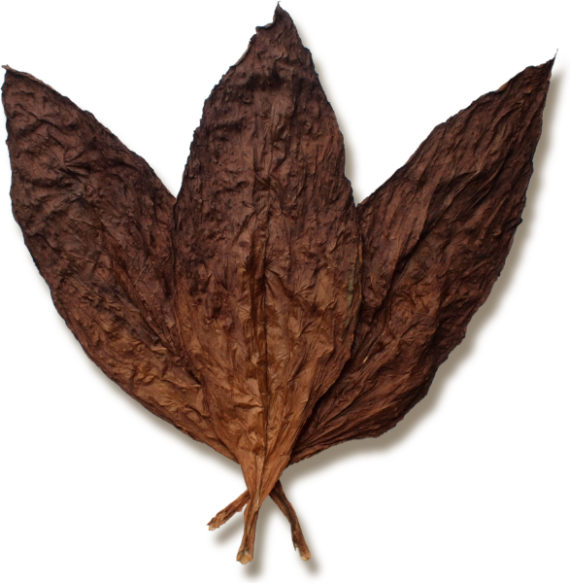 Blind Monkey Wrapper Leaf Tobacco