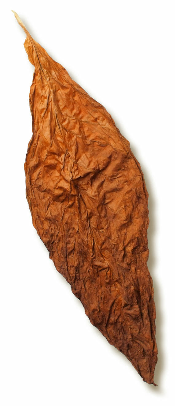 Cigar Leaves for Sale