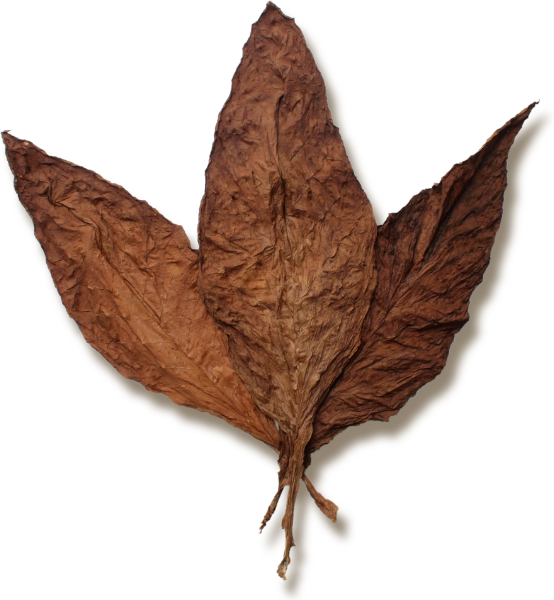 Glasgow Magistrate Wrapper Leaf Tobacco