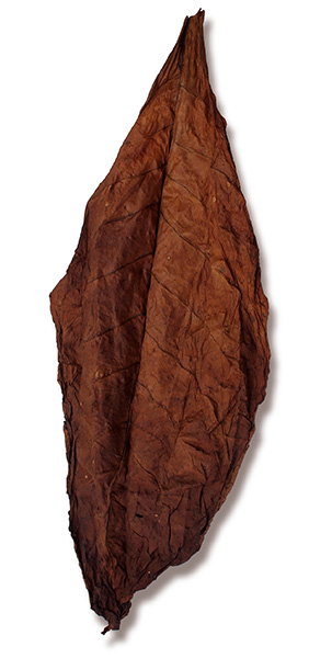 Tennessee Dark Fire Cured Leaf for Sale