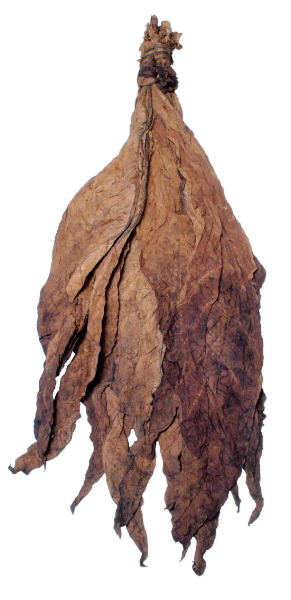 Aged Glasgow Magistrate Wrapper Leaf Tobacco