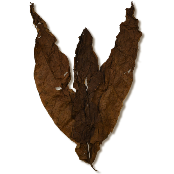 African Cameroon Solid Leaf