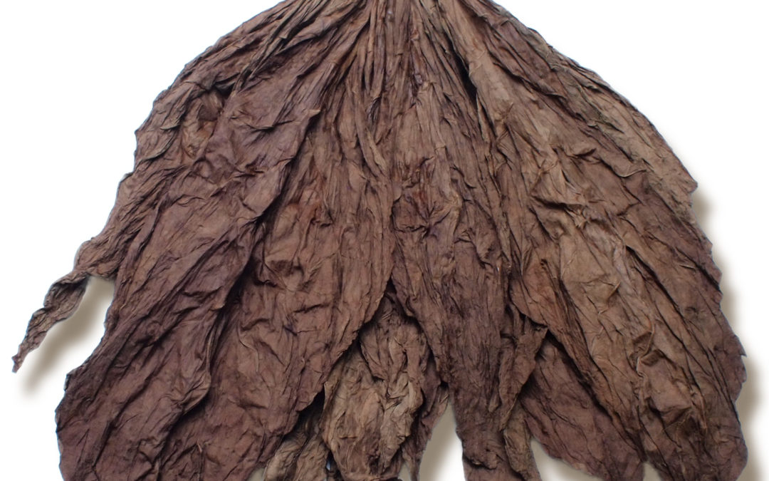 Seco vs. Ligero Tobacco Leaves