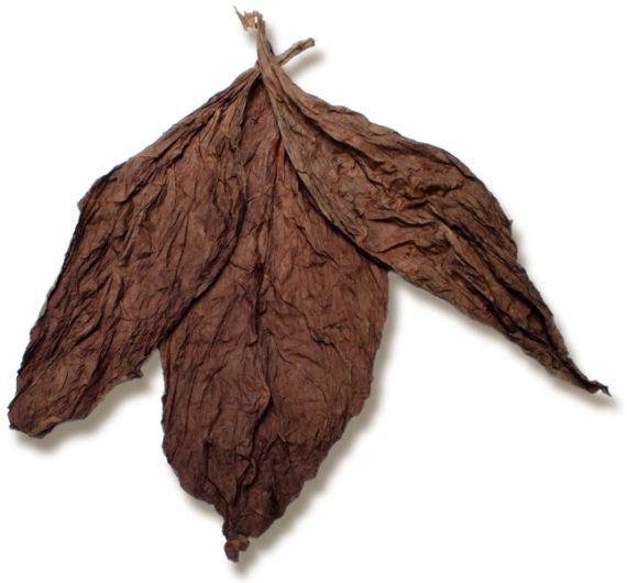 Ecuadorian Seco Cuban Seed Tobacco for Sale