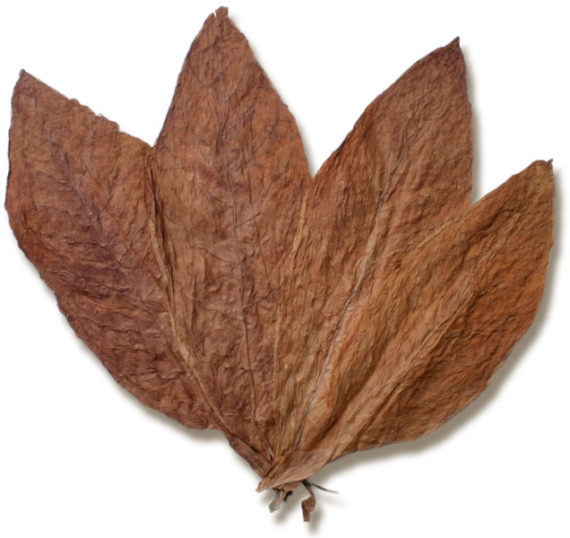 French Burley Wrapper Leaf Tobacco