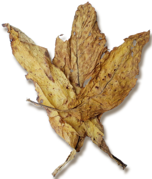 Organic Virginia Flue Cured Lemon Leaf for Sale