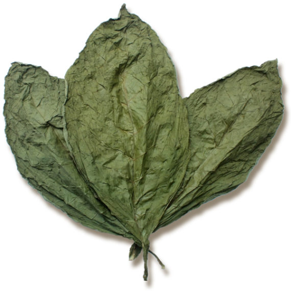 Candela Wrapper Tobacco Leaf for Sale