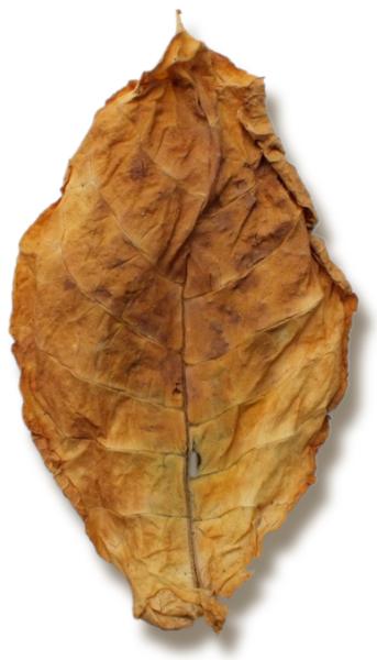 Oriental Basma Leaf