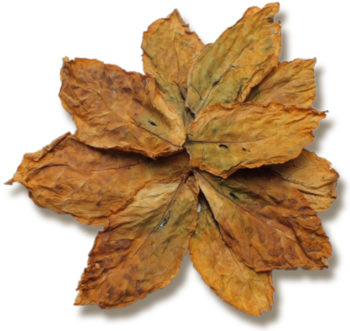 Oriental Basma Tobacco Leaves