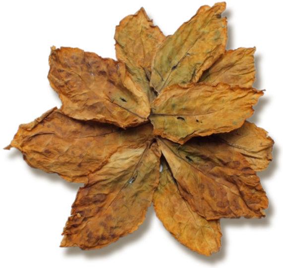 Oriental Basma Tobacco Leaves