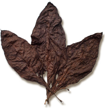 Mexican Oscuro Wrapper Tobacco for Sale