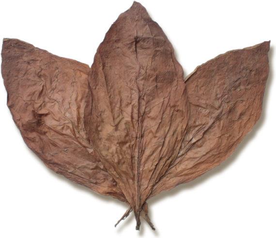 Nicaraguan Rosada DAC Wrapper Tobacco for Sale