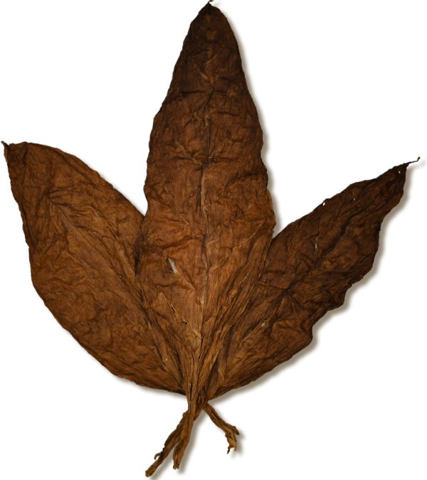 Characteristics of Air Cured Tobacco