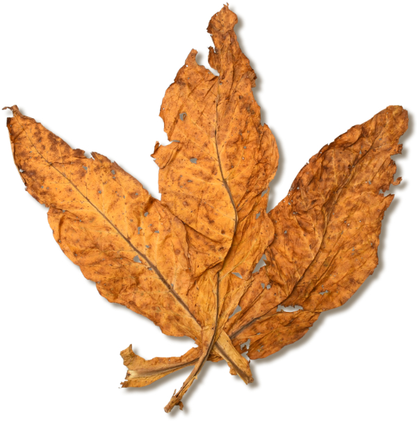 Flue Cured Tobacco Buyers Guide